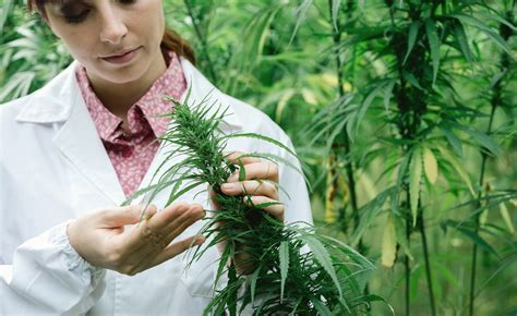 'Women in Weed' Documentary Shows How Women Can Thrive in