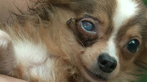 The Reality of Puppy Mills - YouTube
