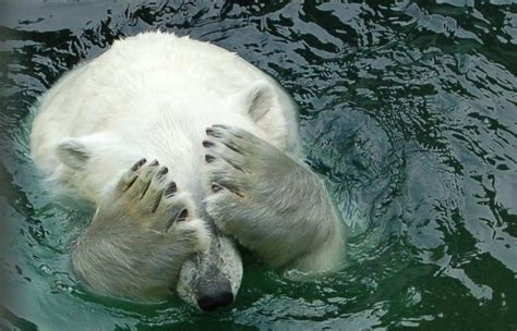 Global Warming Might Affect 16 % of Animal Species on the