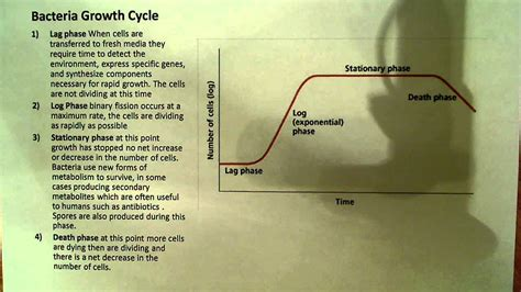 Bacteria Growth curve - YouTube