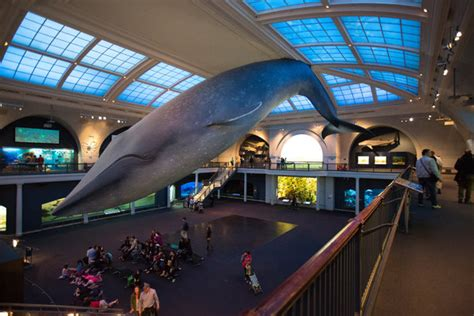 Museumgoers Wonder: Why Doesn't the Whale Fall? - The New